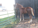 Hosanna's Macy's star filly